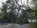 Hurricane Sandy hit Chincoteague National Wildlife Refuge (VA) (8141856140).jpg