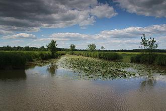 Zone naturelle d'intérêt écologique, faunistique et floristique - The Ile Saint-Aubin ZNIEFF classified under the Angevin low valleys in Maine-et-Loire.