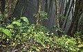 Ilha das Flores P5290315 (35876999201).jpg