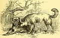 """Image from page 446 of """"The boy travellers in Australasia.jpg"""