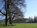 Imposing oak trees, Bicton College - geograph.org.uk - 364414.jpg