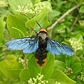 Insects from Madayipara DSCN2075.jpg