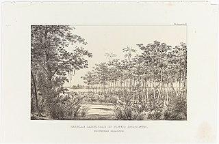 Insulae Sabulosae in Fluvio Amazonum, Provinciae Paraënsis