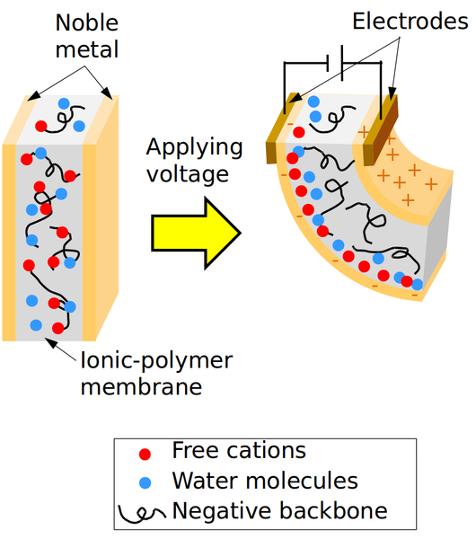 File:Ionic polymer-metal composites.png