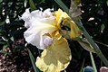Iris Apollos Robe 4zz.jpg