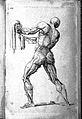 J. Tinney, Compendium anatomicum...; male ecorche Wellcome L0027879.jpg