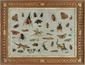 Jan van Kessel (I) - Insects and reptiles.png