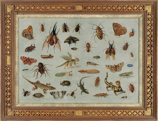 Jan van Kessel (I) - Insects and reptiles