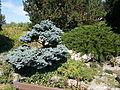 Japanese Garden. Bush. - Margaret Island, Budapest, Hungary.JPG