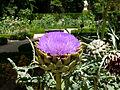 Jardín Botánico 02.jpg
