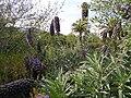 Jardinbotanique16.JPG