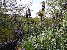 Jardin botanique de barcelone wikimonde for Jardin botanique barcelone