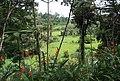 Jungle Flowers, Pacific Harbour, Fiji - panoramio.jpg