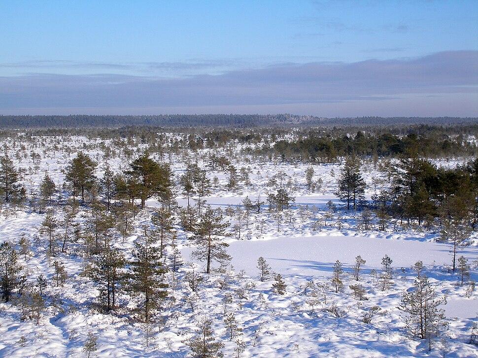 Kõnnu Suursoo winter