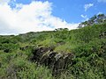 Kaiwi State Scenic Shoreline 15.jpg