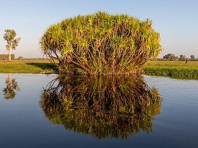 Kakadu (AU), Kakadu National Park, Yellow Water -- 2019 -- 3782 (crop).jpg