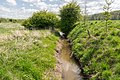 Kalletal - 2015-05-02 - LIP-013 Aberg-Herrengraben (42).jpg