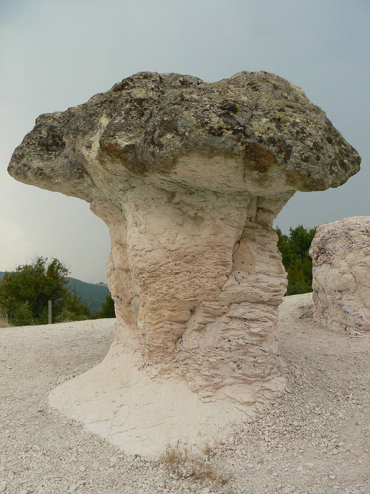 The Stone Mushrooms Wikipedia