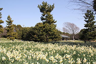 Kasai Rinkai Park - Image: Kasai Rinkai Park 2011 1