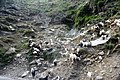 Kashmiri goat.jpg
