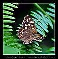 Kelebek Etkisi 004 - panoramio.jpg