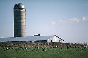 Kent County, Maryland - A farm in Kent County, Maryland