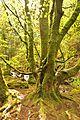Killarney National Park - Torc Waterfall (7107436777) (2).jpg