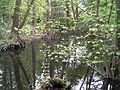Kleiner Spreewaldpark in Schöneiche bei Berlin 02.jpg