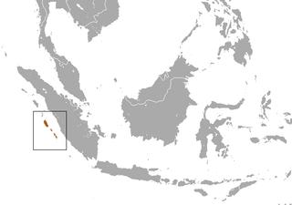 Klosss gibbon Primate in the gibbon family, endemic to the Mentawai Islands