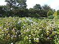 Kobe Municipal Arboretum in 2013-6-22 No,34.JPG