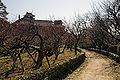 Kochi Castle17s3872.jpg