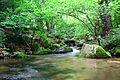 Koleshinski vodopad 19.JPG