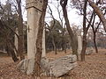Kong Yuxu - two bixi - seen from WSW - P1060248.JPG