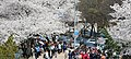 Korea Seoul Sprting Flowers 20140401 15 (13556834514).jpg