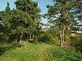 Králův Dvůr, Zahořanský stratotyp, les nahoře.JPG