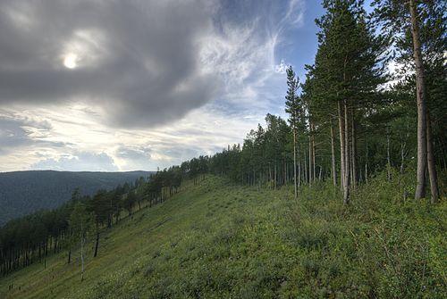 Krasnoyarsk Taiga