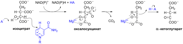 Krebs Cycle Reactions 4+5 ru.png