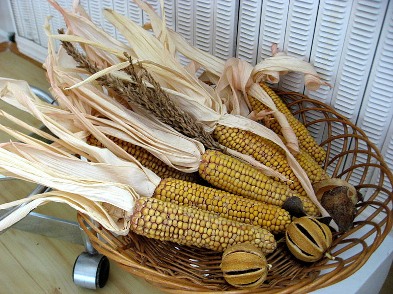File:Kukuřice.jpg
