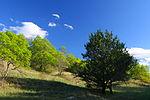 LBJ Grasslands Hillside.jpg