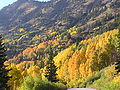Fall Foliage in the canyon