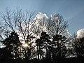 LIGHTS - panoramio - Behrooz Rezvani (3).jpg