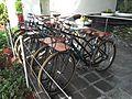 La Concha Resort Bike Sharing.jpg