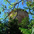 La torre naturale.jpeg