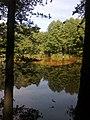 Leśny staw 1 - panoramio.jpg