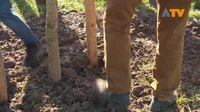 File:Leerlingen planten bomen tijdens boomplantdag - Altena TV.webm