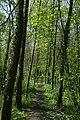 Leiemeersen , typisch rivierlandschap te Sint-Martens-Latem - 372524 - onroerenderfgoed.jpg