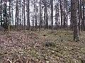 Lentvario sen., Lithuania - panoramio (62).jpg