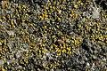 Lichen (38776495270).jpg