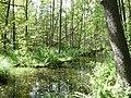Lidingö nature 2016 2.jpg