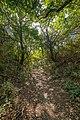 Light of Fall (44307632914).jpg